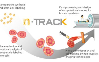 nTRACK Strives to Track Stem Cells in Real-Time